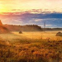 поле в 4 утра . :: Наталья Владимировна Сидорова