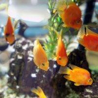 рыбки :: Рома Григорьев