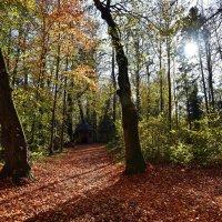 Осенний парк ... :: Владимир Икомацких