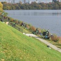 Рыбаки вдоль берега Москвы реки. :: Татьяна Помогалова