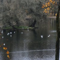 седой остров для седых птиц :: sv.kaschuk