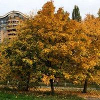 Осень в городе. :: Сергей Рубан