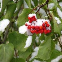 Первый снежок :: OLLES