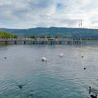Цюрихское озеро. :: Наталья
