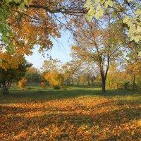 Осень разлила краски :: оксана косатенко