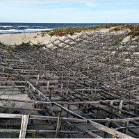 Балтика. Укрепления мигрирующих дюн. :: Валерия Комова