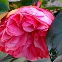Смотрят грустными глазами на нас последние цветы... :: Светлана
