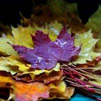 кленовые листья :: Горкун Ольга Николаевна