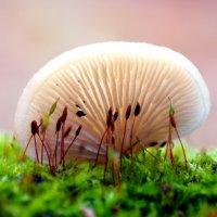 Про грибы, мхи и лишайники.. :: Андрей Заломленков