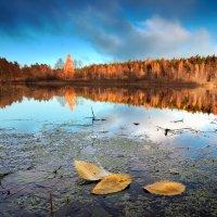 Просто осень....2. :: Андрей Войцехов