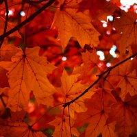 Осень :: Alesja Proskurina