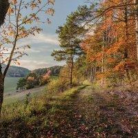 Гуляла осень по лесам.., раскрашивала листья... :: Olga Ger
