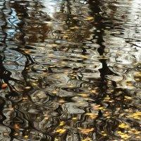 Холодное отражение осени. :: Алексей Батькович