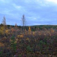 Осенние прогулки :: Ольга