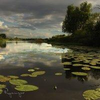 На-озере-в-пойме-реки Мокша. :: Борис Ряузов