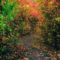 Осенние краски :: Дмитрий Чернов