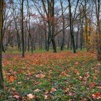 Осень в одесских парках. :: Вахтанг Хантадзе