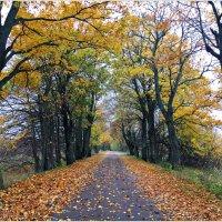 Дорога в осень... :: Валерия Комова