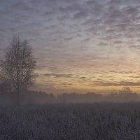 Морозный рассвет :: Сергей Алексеев