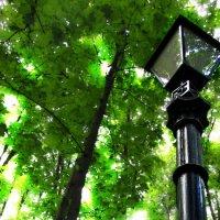 Одинокий фонарь. :: Александр Никитин