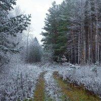 Лукав и ласков иней октября... :: Лесо-Вед (Баранов)