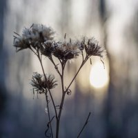 Осеннее настроение... :: Алиса Колмагорова