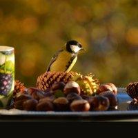по осени :: linnud