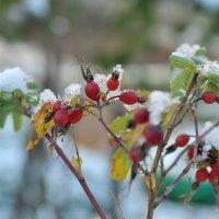 Первый снег :: Albina
