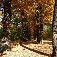 Дорога в Осень.... :: LORRA ***