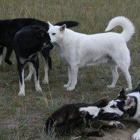 жизнь бродячих собак :: Дмитрий Солоненко