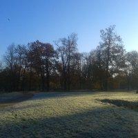 Морозное утро :: Сапсан