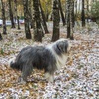 а у нас уже зима.... :: Лариса Батурова