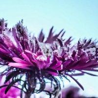 цветочек замороженный :: Лариса Батурова