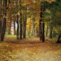 Осенняя аллея :: Ирина Румянцева