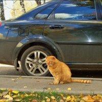 Под цвет Осени :: °•●Елена●•° ♀