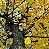 Осень... :: Михаил Столяров