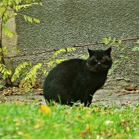 жил да был черный кот за углом :: Александр Корчемный