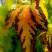 Осенний лист . Октябрь . :: Мила Бовкун