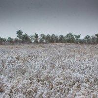 Первый снег :: Алина Шостик
