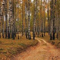 извилистая дорога :: оксана