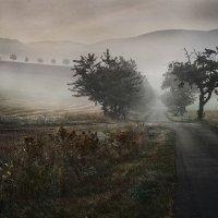 Туманные владения... :: Olga Ger