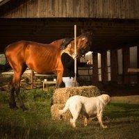 Фотопрогулки на лошади :: Ольга Петруша