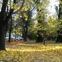 Осень в парке Сан-Гали. (Петербург, октябрь 2017 год). :: Светлана Калмыкова