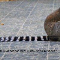 В Белгородском зоопарке :: Анатолий Мартынюк