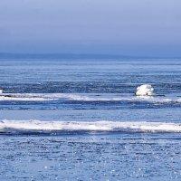 Лебеди во льдах :: Helga Preiman
