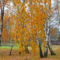 Блондинка Осень :: Василь Веренич