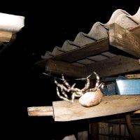 Ночь, дача, паук, перспектива :: Марина Кириллова