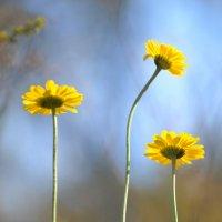 Всё тянется к свету и цветы, и люди, и душа. :: Ольга Зеленкова