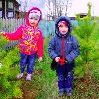 посадили деревце... :: леонид логинов