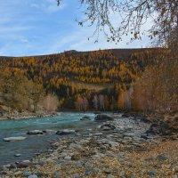 Чуя в нижнем течении. :: Валерий Медведев